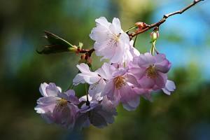 spring-flower-289844_640