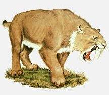 tigre à dent de sabre