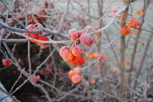 hiver chez odile B 2