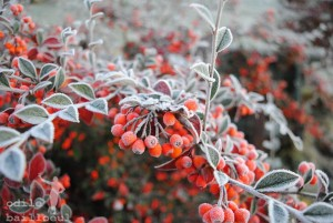 hiver chez odile B