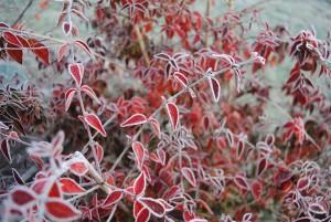 hivers chez Odile B 4